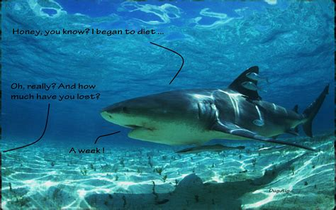 a shark's diet picture 6