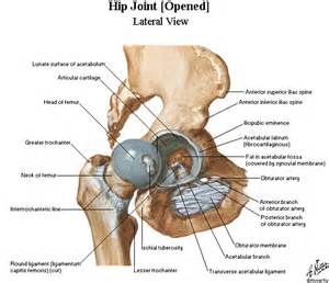 pain the the hip joint picture 10