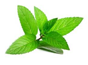 peppermint picture 11