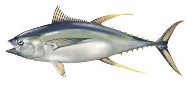 tuna and yellowing of skin picture 11
