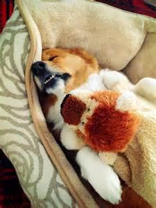sleeping ties imgur picture 9