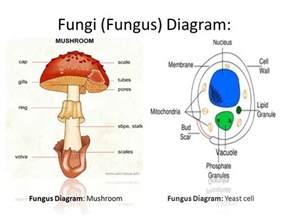 fungi nail picture 3