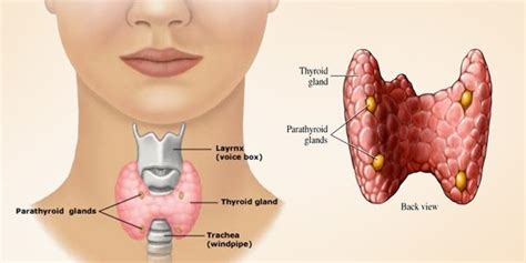 free thyroid screening picture 1