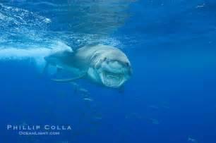 white teeth california picture 6
