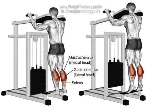 calf muscle exercise picture 9
