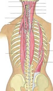 back muscle pain picture 2