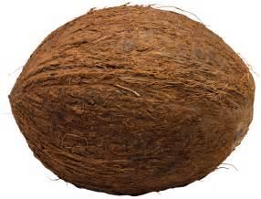 coconut picture 5