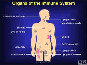 can white quinine to the body be used picture 13