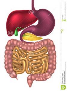 gastrointestinal enoscopy internal medicine picture 9