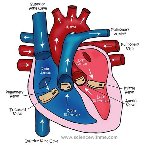 can i buy circu aid for blood circulation picture 3
