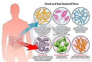 el flora dysbiosis picture 6
