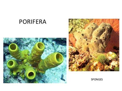 invertebrates sponges digestion picture 13