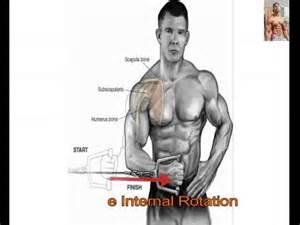 bodybuilding bones exercise and anatomy picture 6