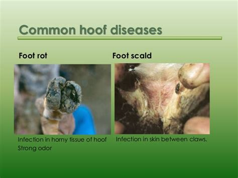 skin disease pictures picture 9
