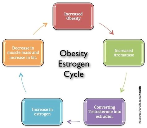 testosterone cycle diet picture 3