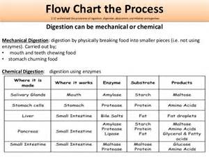 chemical process during digestion picture 1