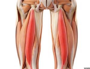 info on pull muscle picture 13