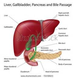 gall bladder and vomiting picture 7