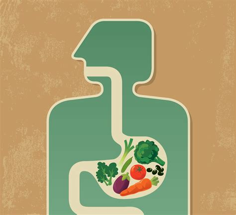 food digestion picture 11
