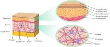 collagen vs cholesterol picture 3