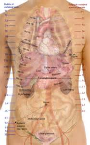 abdominal muscle injuries women picture 5