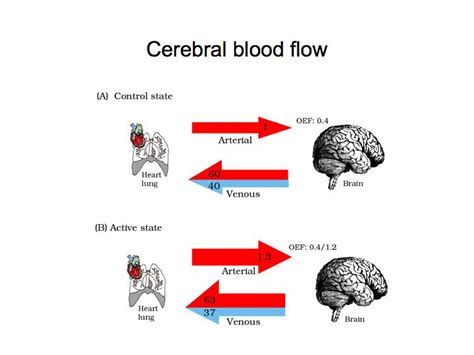 cerebral blood flow motor cortex picture 14