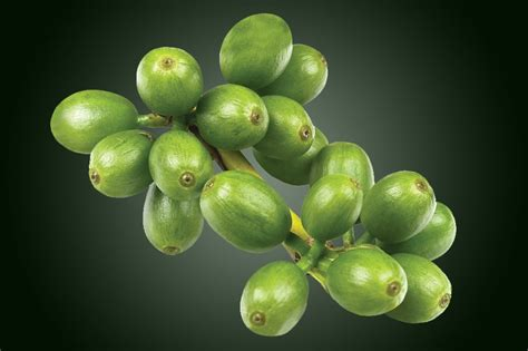 green coffee bean extract health benefits picture 2