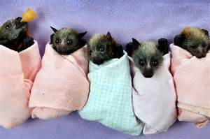 pictures of bats sleeping picture 5
