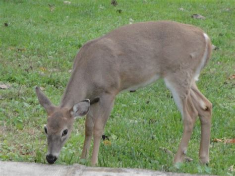 can deer antler spray cause blisters picture 7