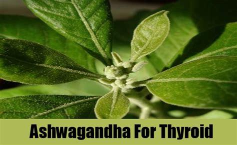 ashwanganda for thyroid picture 2