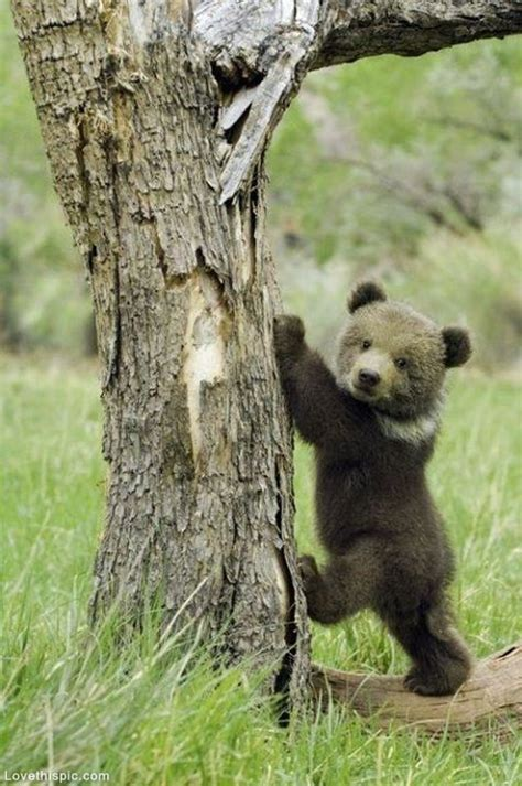 bears and small tumblr picture 2