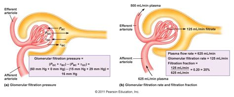 Causes low blood pressure picture 11