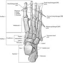amphiarthrodial joint picture 18