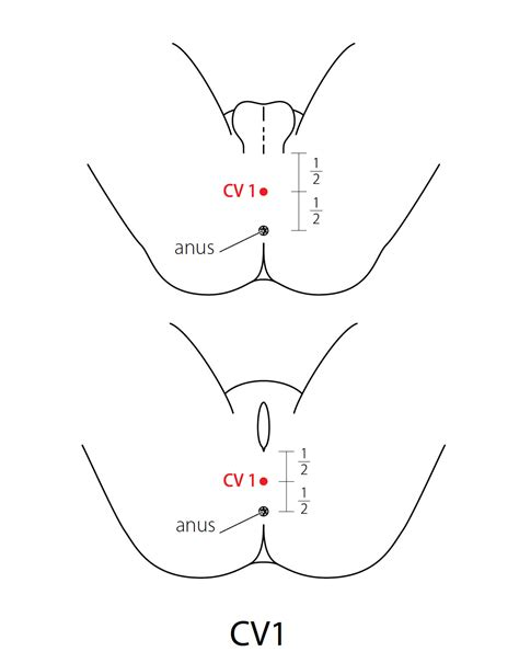 accupressure point for penis enlargment picture 3