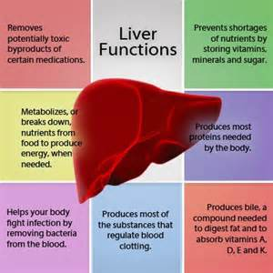 what is the function of the liver picture 2