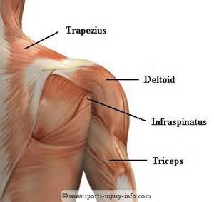 pain in between shoulder blades can being a picture 6