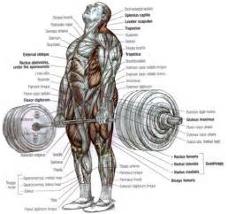 exercises to build fast twitch muscle picture 3