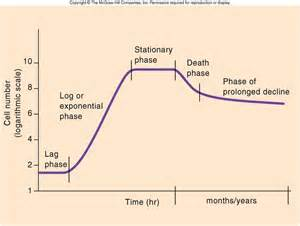 phases for bacterial growth picture 2