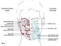 artery in lip picture 13