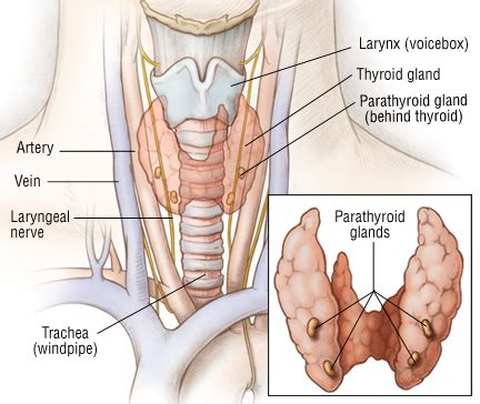 treatment options treatment for benign thyroid tumor picture 3