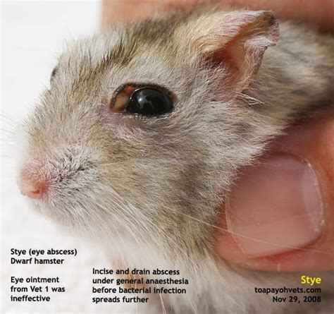 eye abscess in rabbit natural treatment picture 14