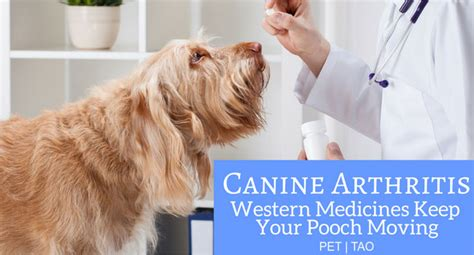 canine pain relief therapy picture 18