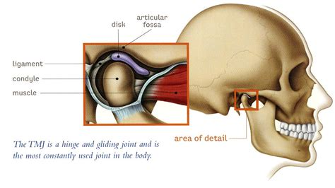 jaw joint pain picture 7