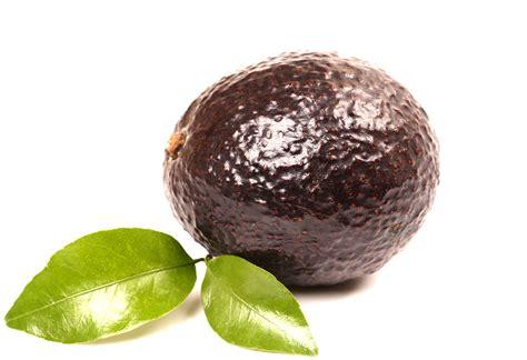 avocado wholesale in philippine picture 17