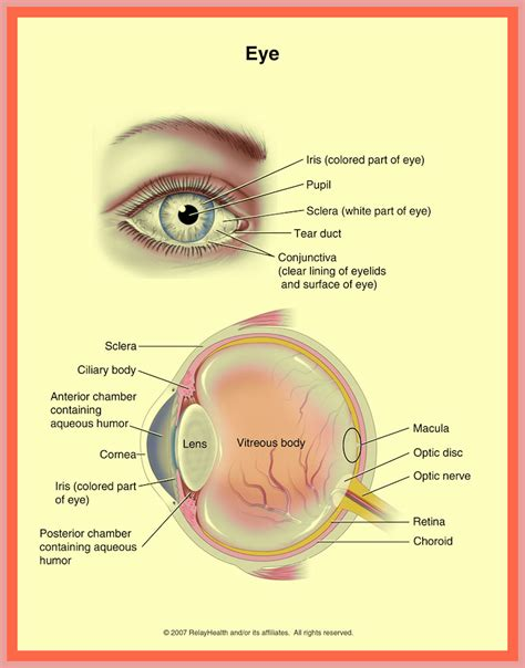 iflamation of the iris muscle picture 1