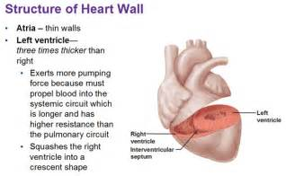 how thick can your heart muscle become picture 2