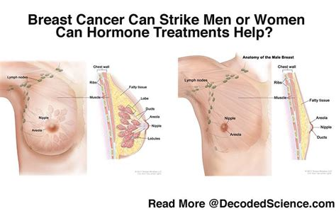 testosterone treatment breast cancer picture 5