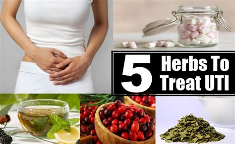 herbs that kill ecoli picture 7