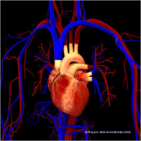 free blood flow animations picture 9