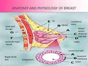 breast enlargement nd enlargement 5days aftersex means picture 11